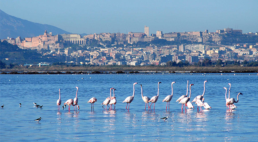 fenicotteri rosa a Cagliari